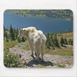 Mountain Goat at Glacier National Park Mouse Pad
