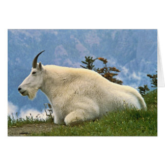 Mountain Goat Greeting Cards
