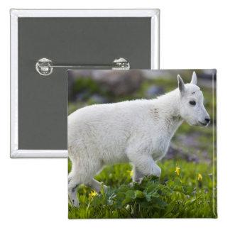 Mountain goat kid at Logan Pass in Glacier 15 Cm Square Badge