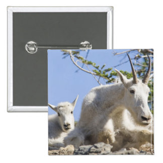 Mountain goat nanny with kid in Glacier National 15 Cm Square Badge