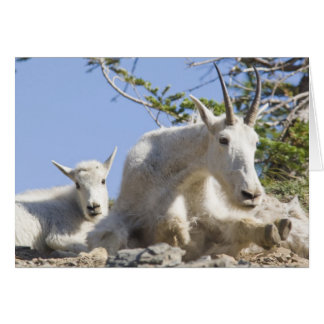 Mountain goat nanny with kid in Glacier National Card