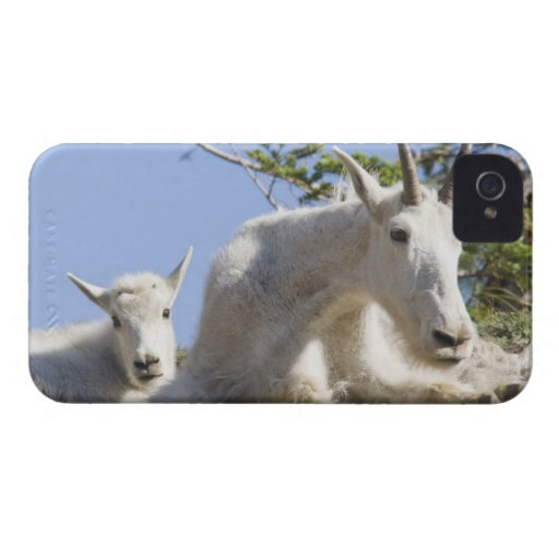 Mountain goat nanny with kid in Glacier National Case-Mate Blackberry Case