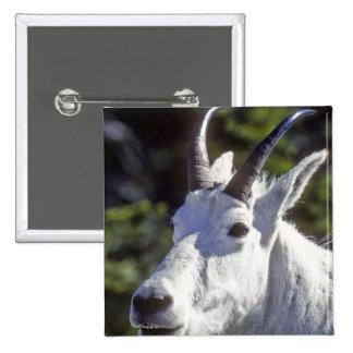 Mountain Goat, Oreamnos americanus, In Glacier 15 Cm Square Badge