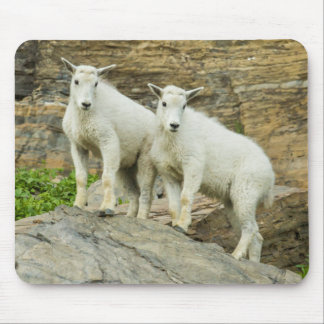 Mountain goat playing in Glacier National Park Mouse Pad