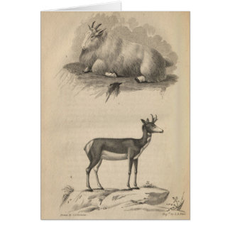 Mountain Goat & Prong Horn Card