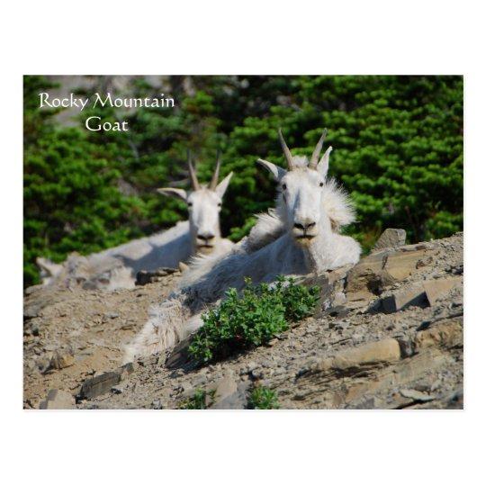 Mountain Goats on Rock Ledge Wildlife Series # 18 Postcard