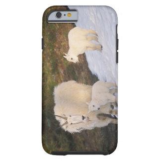 mountain goats, Oreamnos americanus, mother and Tough iPhone 6 Case