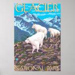 Mountain Goats Scene - Glacier National Park, Poster
