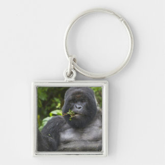 Mountain Gorilla and aging Silverback Silver-Colored Square Key Ring