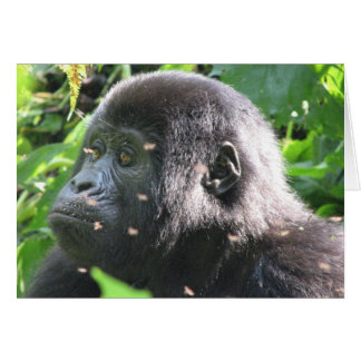 Mountain Gorilla Card