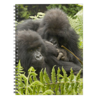 Mountain Gorilla, family in day nest Notebook