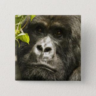 Mountain Gorilla, Gorilla beringei beringei, 15 Cm Square Badge
