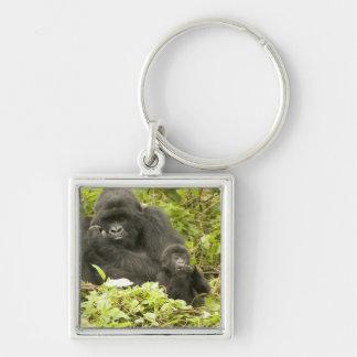 Mountain Gorilla, Gorilla beringei (formerly G. Keychains