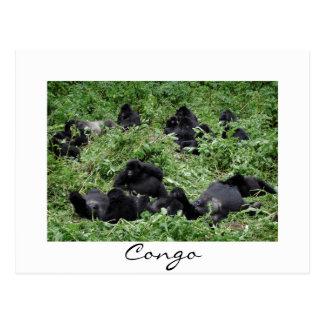 Mountain gorilla group Congo white border postcard