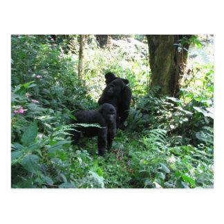 Mountain Gorillas Postcard