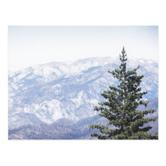 Mountain Landscape with Pine | Postcard