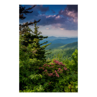 Mountain Laurel at Sunrise Poster