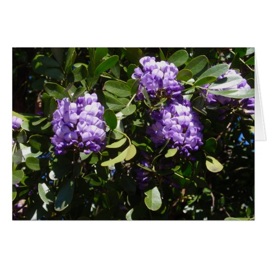 Mountain Laurel in Sunlight Card