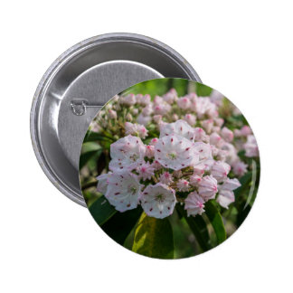 Mountain Laurel Wildflower Button