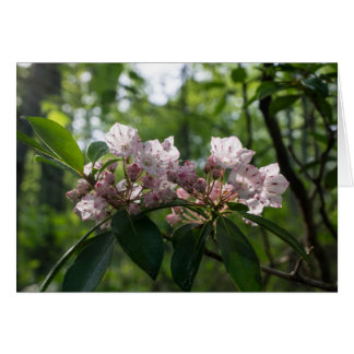 Mountain Laurel Wildflower Card