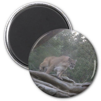 Mountain Lion 6 Cm Round Magnet