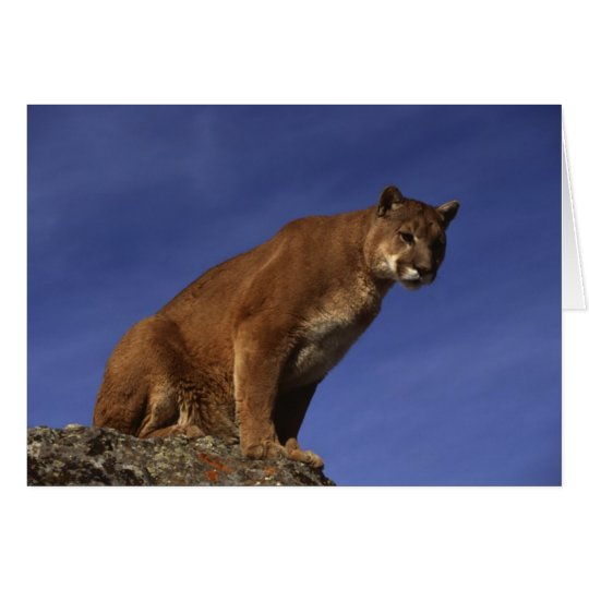 Mountain Lion Card