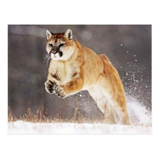Mountain Lion (Cougar) Postcard