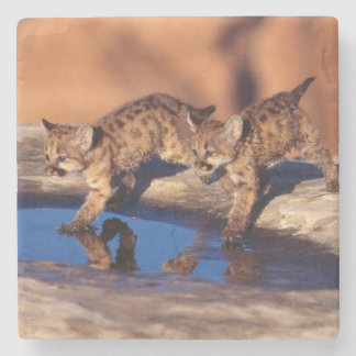 Mountain Lion Cubs Stone Coaster