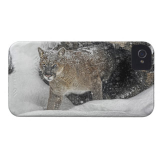 Mountain Lion in Snow iPhone 4 Cover