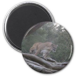 Mountain Lion Magnet