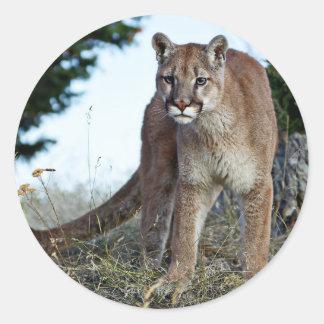Mountain Lion on the Mountain Classic Round Sticker