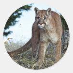 Mountain Lion on the Mountain Sticker