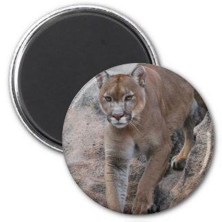Mountain lion rock climbing 6 cm round magnet