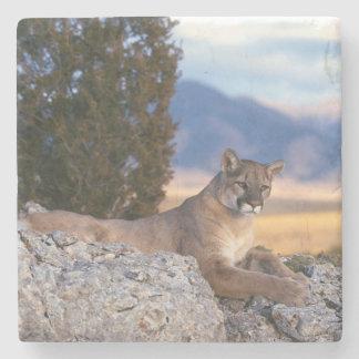 Mountain Lion Stone Coaster