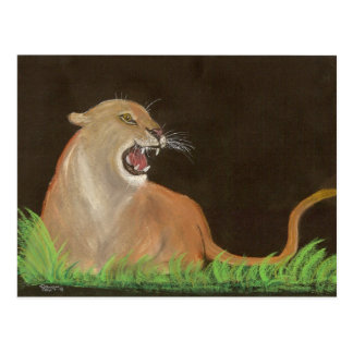 mountain lions rage post card