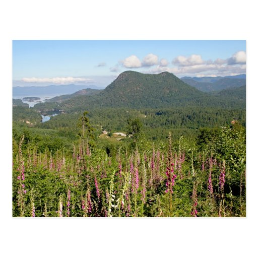 Mountain, Ocean, and Wildflowers Photo Postcard