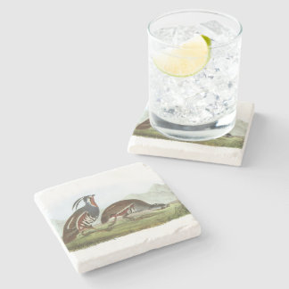 Mountain Quail by Audubon Stone Coaster