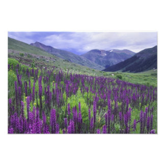 Mountains and wildflowers in alpine meadow, 2 photographic print