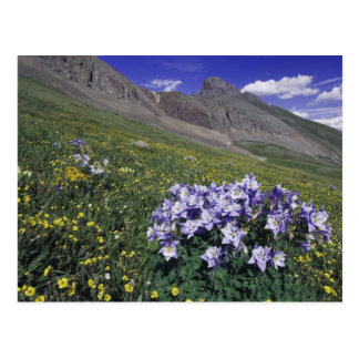 Mountains and wildflowers in alpine meadow, Blue Postcard