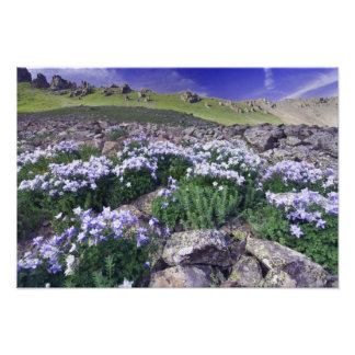 Mountains and wildflowers in alpine meadow, art photo
