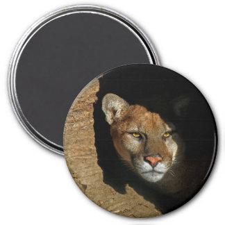 "Mountian Lion Hiding in Log 3"" Magnet"