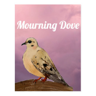 Mourning Dove Backyard Bird on Branch Postcard