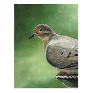 Mourning Dove Bird Art Postcard