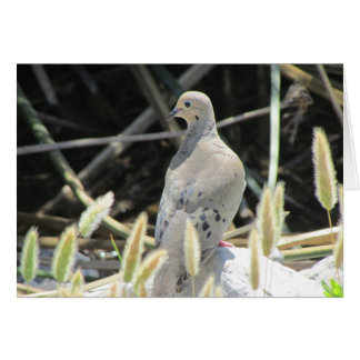 Mourning Dove Blank Card