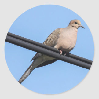 Mourning Dove Classic Round Sticker