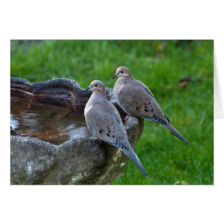 Mourning Dove - Frameable Art Card