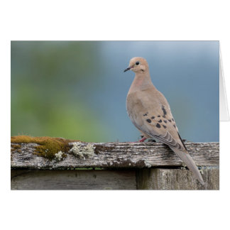 Mourning Dove Greeting Card (blank)