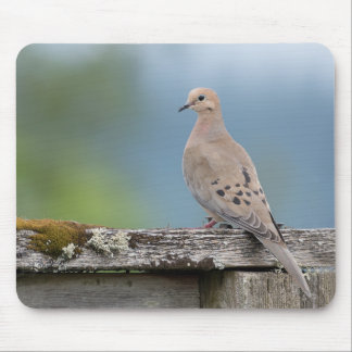 Mourning Dove Mouse Pad