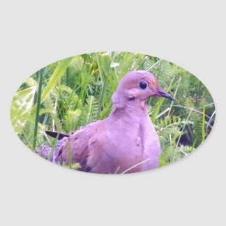 Mourning Dove Oval Sticker