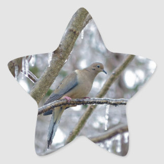 Mourning Dove Star Sticker